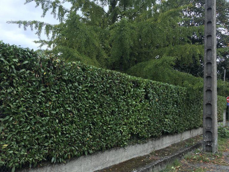 Entretien jardin Pau Morlaas